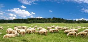 农业企业全盘账务处理及管控要点